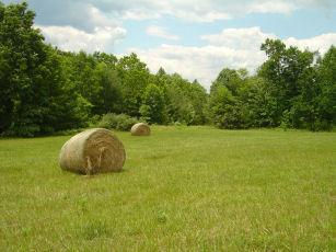 Farms & Acreage